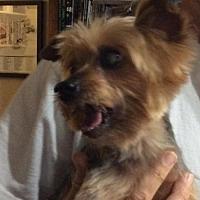 Adopt A Pet :: Tom Tom (FL) - Largo, FL