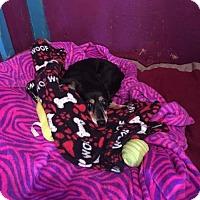 Adopt A Pet :: Lilly - York, SC