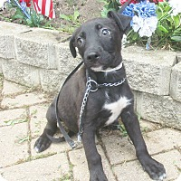 Adopt A Pet :: Flambo - West Chicago, IL