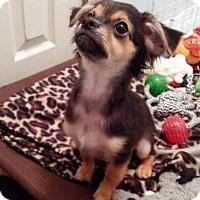Adopt A Pet :: Java - Tomball, TX