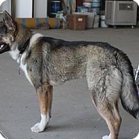 Adopt A Pet :: Becca - Paso Robles, CA