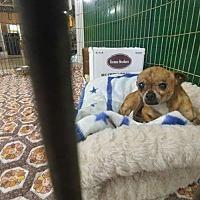 Adopt A Pet :: Doug - Trenton, MO
