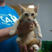 Adopt A Pet :: Memphis - Waxahachie, TX