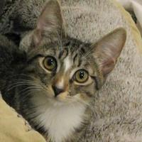 Adopt A Pet :: Tinkerbell - Encinitas, CA