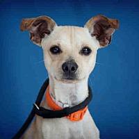 Adopt A Pet :: BOWSER - Downey, CA