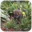 Photo 2 - Shepherd (Unknown Type) Mix Puppy for adoption in Ortonville, Michigan - Fudge