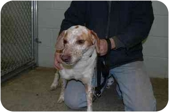 Spaniel (Unknown Type) Mix Dog for adoption in Warwick, Rhode Island - Barney: Cuddly and Huggable!