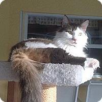 Adopt A Pet :: Bruno - Vero Beach, FL