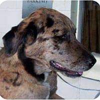 Adopt A Pet :: Dexter - FOSTER NEEDED - Seattle, WA
