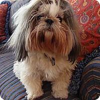 Adopt A Pet :: Lily - Wilmette, IL