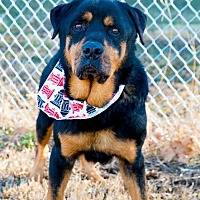 Rottweiler Mix Dog for adoption in Muldrow, Oklahoma - Dice