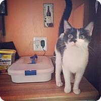 Adopt A Pet :: Bridget - Raleigh, NC