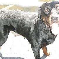 Adopt A Pet :: Gracie - Alachua, GA