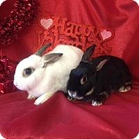 Adopt A Pet :: DAvis - Paramount, CA