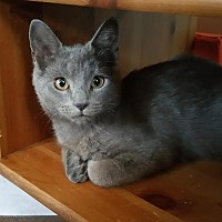 Adopt A Pet :: Blue - Philadelphia, PA