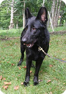 German Shepherd Dog Dog for adoption in Louisville, Kentucky - Nora