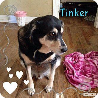 Rottweiler/German Shepherd Dog Mix Dog for adoption in Rowlett, Texas - Tinker