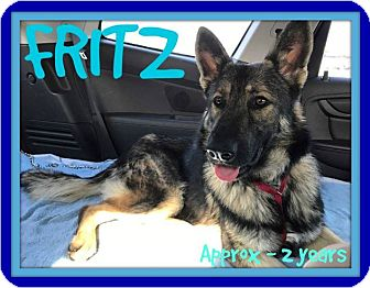 German Shepherd Dog Dog for adoption in New Brunswick, New Jersey - FRITZ
