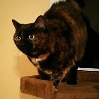 Adopt A Pet :: Ninja - Herndon, VA