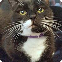 Adopt A Pet :: Hops - Sarasota, FL