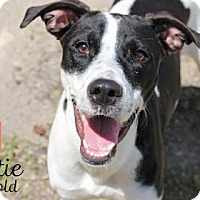 Adopt A Pet :: Hattie - Lonely Heart - Gulfport, MS