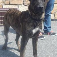 Adopt A Pet :: Taffy - Clearfield, PA