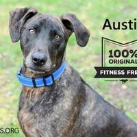 Adopt A Pet :: Austin - Negaunee, MI