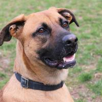 Adopt A Pet :: Layla - Elkhorn, WI