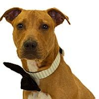 Adopt A Pet :: Moe - St. Cloud, FL