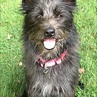 Adopt A Pet :: Sprinkles - MEET ME - Norwalk, CT
