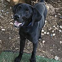 Adopt A Pet :: Trapper - Phoenix, AZ