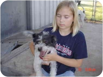 Shih Tzu/Westie, West Highland White Terrier Mix Dog for adoption in Kerrville, Texas - Rascal