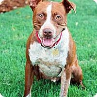 Adopt A Pet :: Rusty D2830 - Fremont, CA