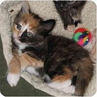 Adopt A Pet :: Hailey - Cincinnati, OH