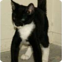 Adopt A Pet :: Dylan - Scottsdale, AZ