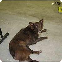 Adopt A Pet :: Lucy - Wahoo, NE