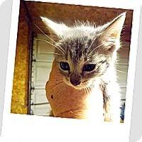 Adopt A Pet :: Lola - Owosso, MI