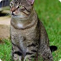 Adopt A Pet :: GUY - Palm Coast, FL