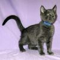 Adopt A Pet :: Morgan - Powell, OH