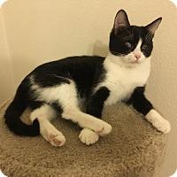 Adopt A Pet :: Squeak - Walnut Creek, CA