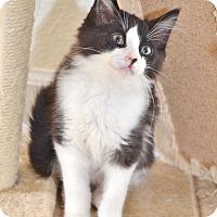 Adopt A Pet :: Peter Gabriel - Davis, CA