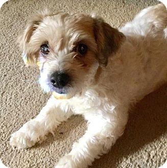 Adopt A Pet :: Maria  - Renton, WA