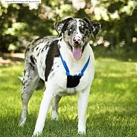 Adopt A Pet :: Hope - Salt Lake City, UT
