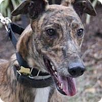 Adopt A Pet :: Gear - Nashville, TN