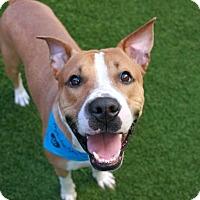 Adopt A Pet :: Artie - Long Beach, NY