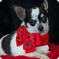 Adopt A Pet :: Emma - Phelan, CA