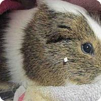Adopt A Pet :: *Urgent* Benny - Fullerton, CA