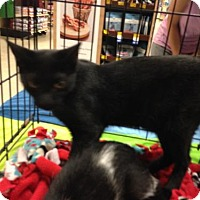 Adopt A Pet :: Gabe - Ephrata, PA