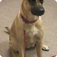 Adopt A Pet :: Sweetie - Mt. Clemens, MI