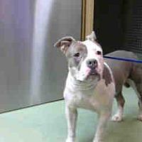 Adopt A Pet :: URGENT 8/19 @ DEVORE - San Bernardino, CA